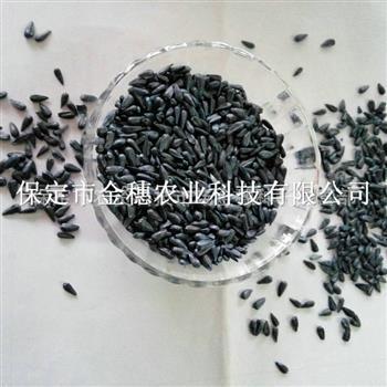 小籽油葵种子的茎、叶、苞片、花、果实
