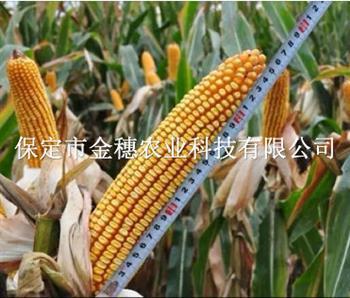 杂交玉米种子田间检验技术