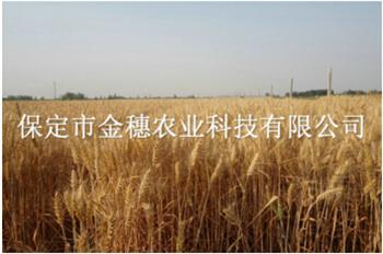小麦种子在追肥时,能用水溶肥吗?