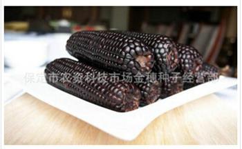 详解【黑糯玉米种子】的营养与栽培要点