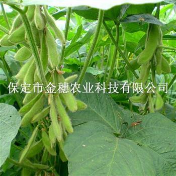 """处于""""萌发期""""中的大豆种子"""