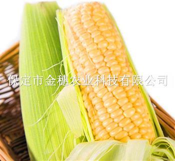 【玉米种子】的优劣辨别方法