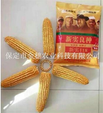 快速了解优质玉米种子的特点