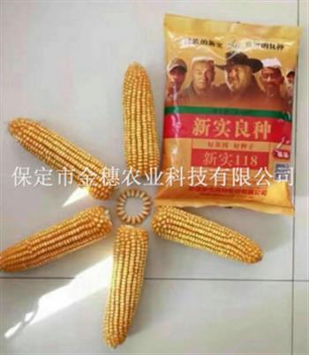 玉米种子采购时应该注意的标准