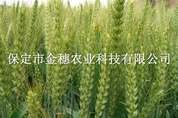 春小麦种子辨别技术