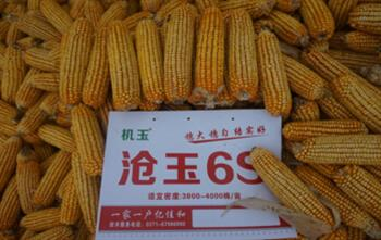 选择【玉米种子】的要领