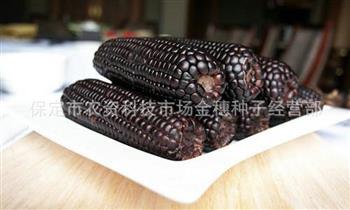黑糯玉米种子具备较高的营养价值