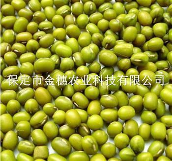 绿豆种子的栽培要点