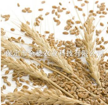 【小麦种子】播出一片希望
