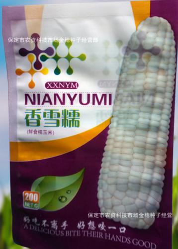 香雪糯水果玉米种子