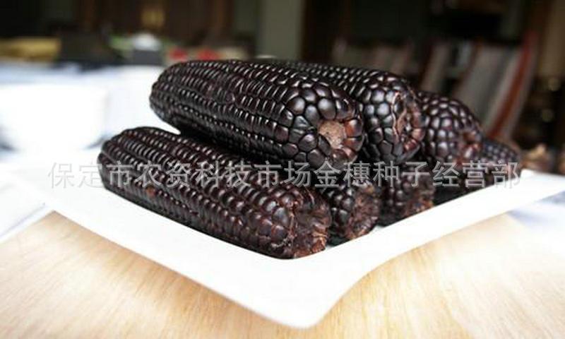 黑糯玉米种子
