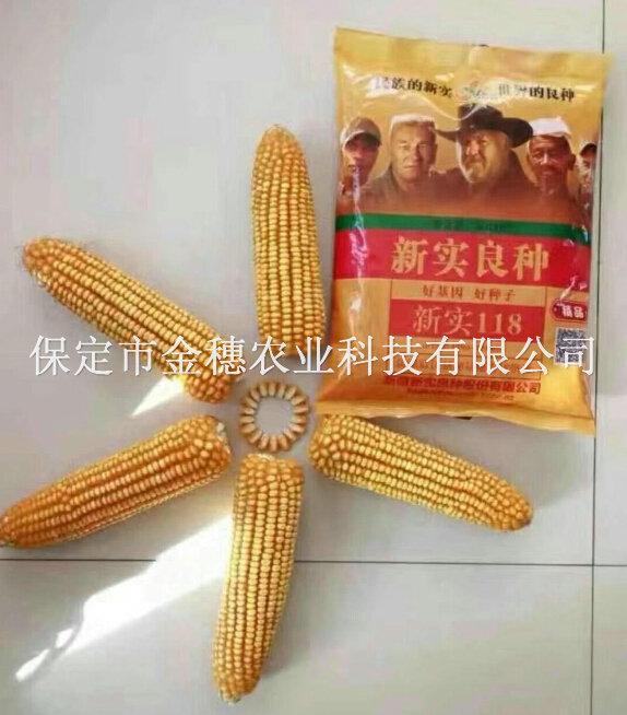 新实118玉米种子
