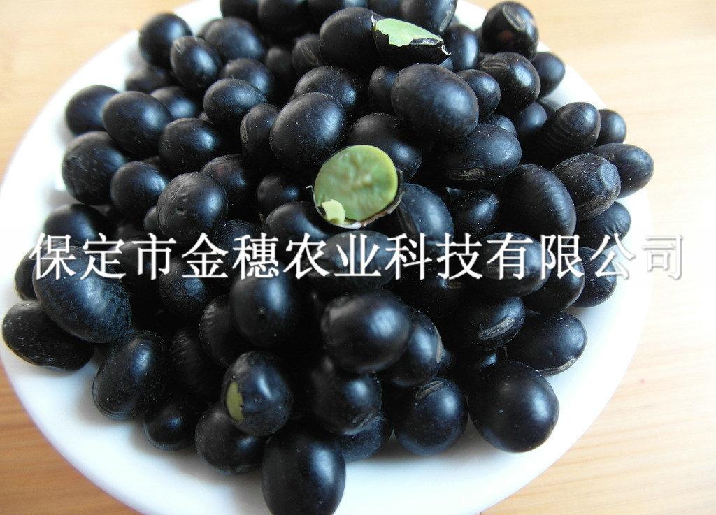 抗病黑大豆种子