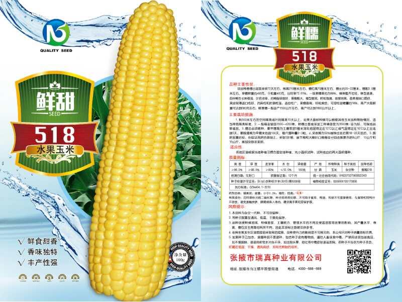 鲜甜518水果玉米种子