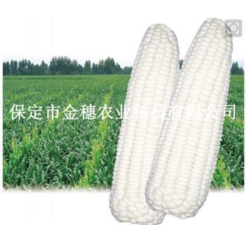 万糯2000-糯玉米种子
