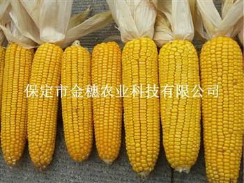 玉米种子批发