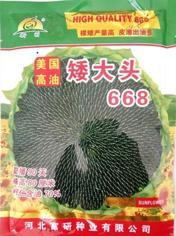 矮大头668——油葵种子